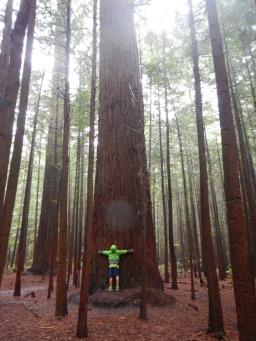 Raining in the Redwoods