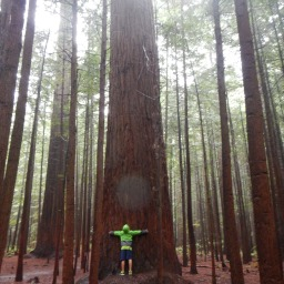 Raining in the Redwoods