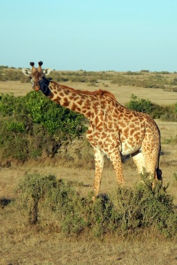 Five Things We've Learned Pursuing the Big Five on Safari